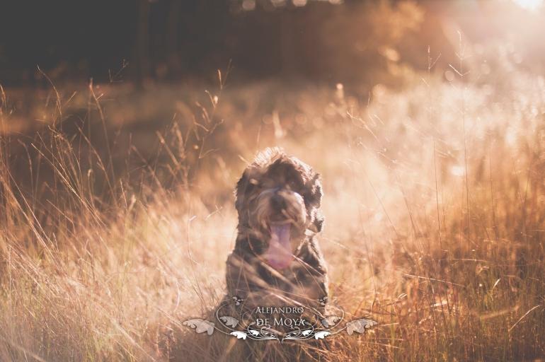 reportajes de mascotas, ciudad real, estética canina, alejandro de moya, patricia campos