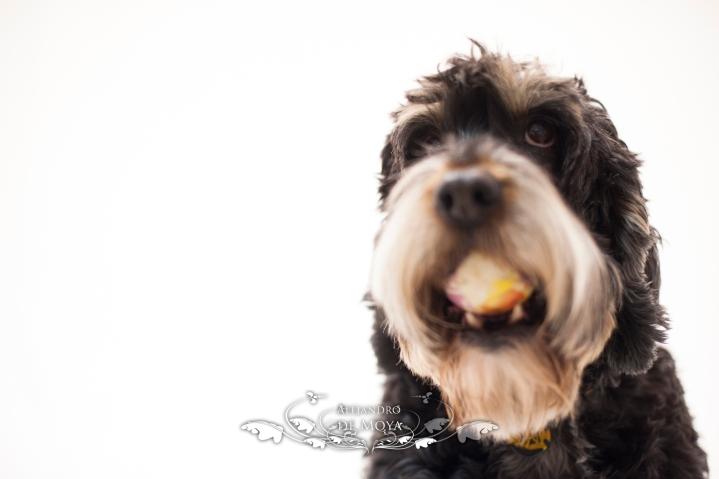 reportaje mascotas, esteticien canina, alejandro de moya, patricia campos