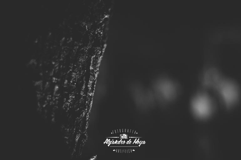 boda-alvaro-y-leticia-_181