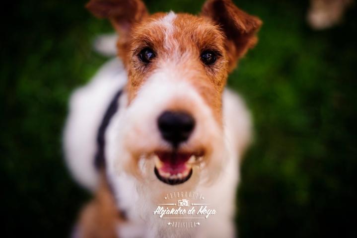 mascotas, fotografia de mascotas, perros, gatos