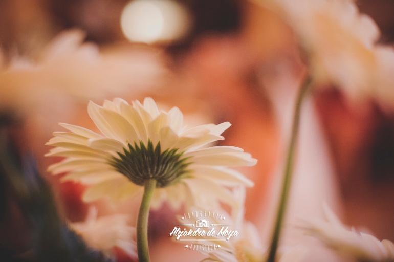 boda luis y cintia_0072
