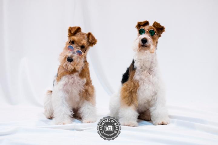 Reportaje de mascotas | PatriciaCampos
